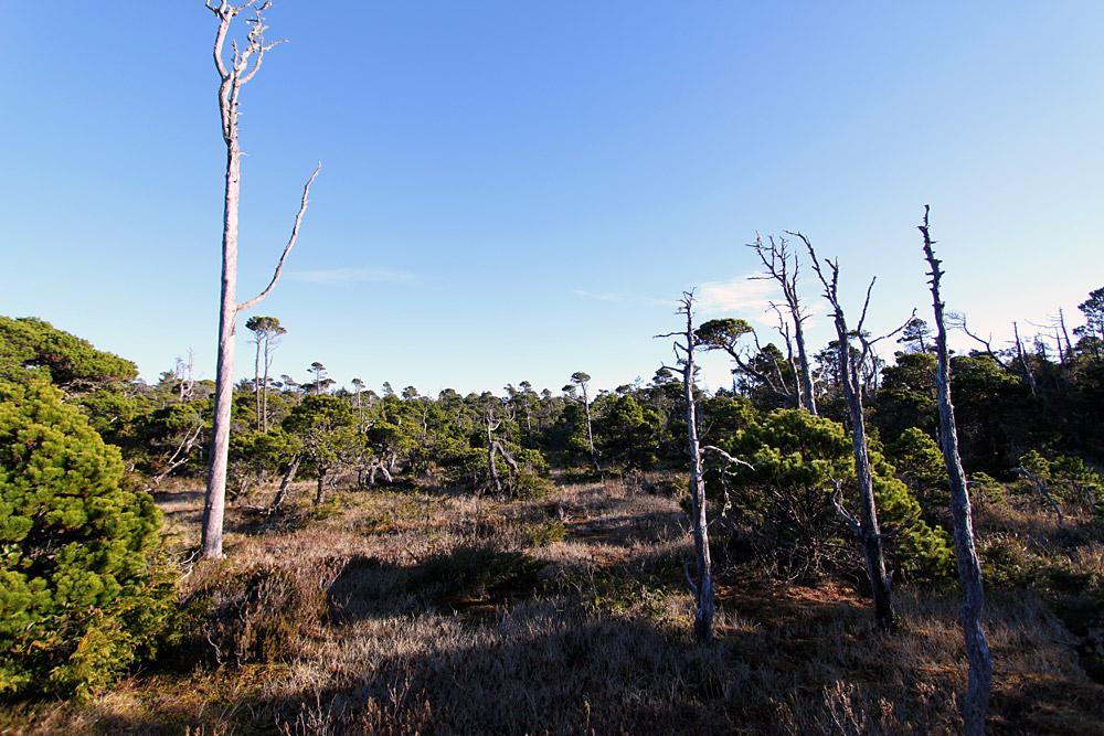 Tofino-bog-trail-3.jpg