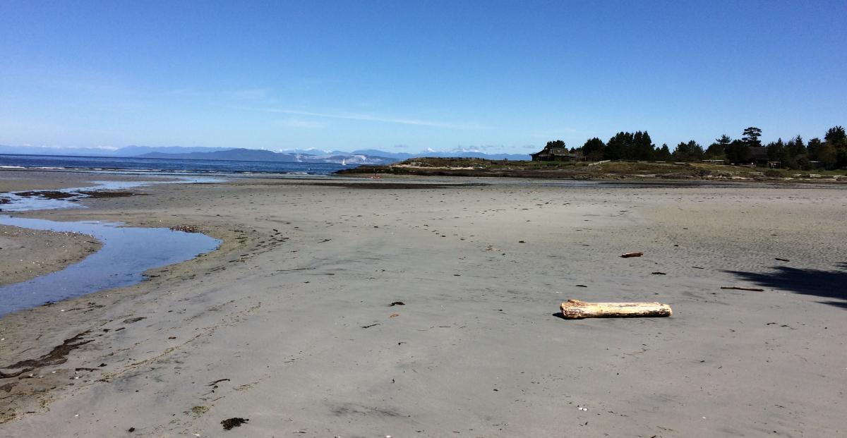 Whale Beach.jpg