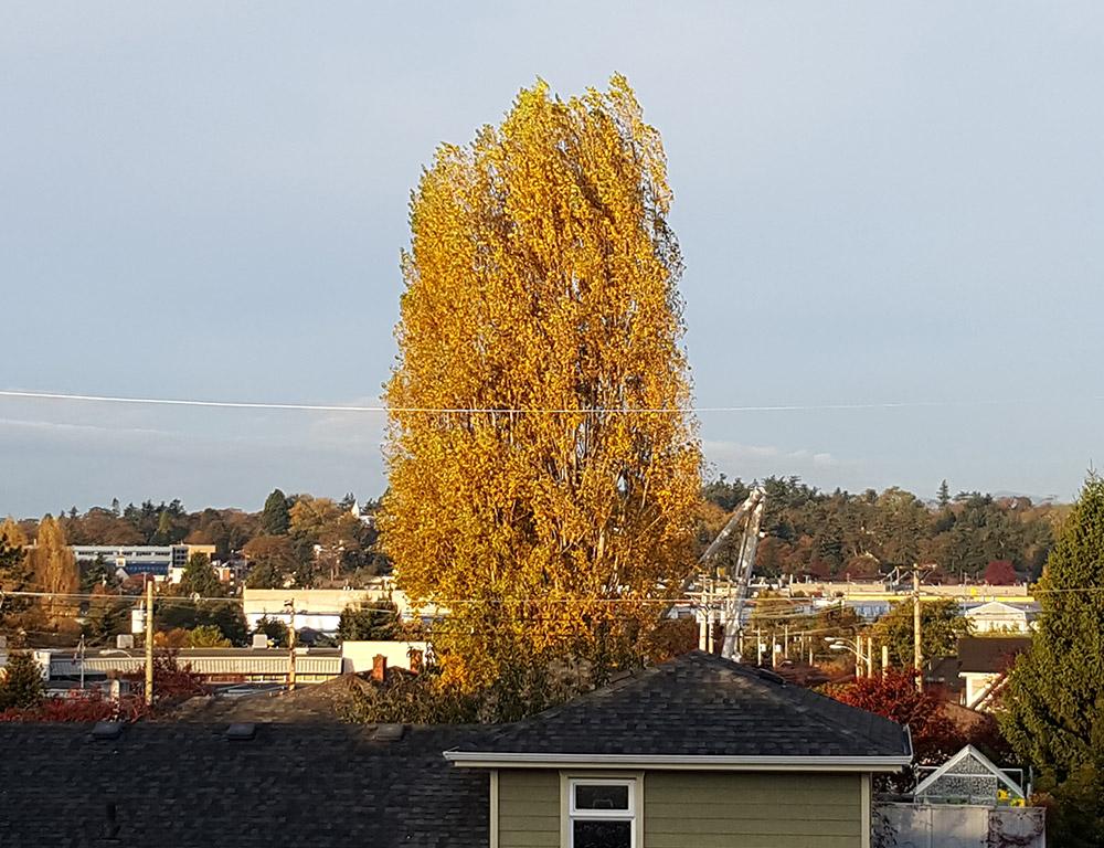 Tree-1.jpg
